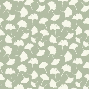 Ginkgo Biloba Plant, Pale Sage Colored Leaves on Ivory Background