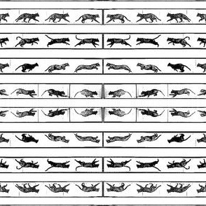 Muybridge's Cats