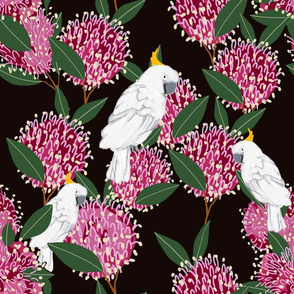 Cockatoos gather on grevilleas