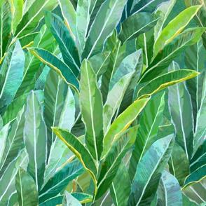 Hawaiian Ginger Leaves Green 150