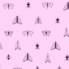 Rose pink pollinators