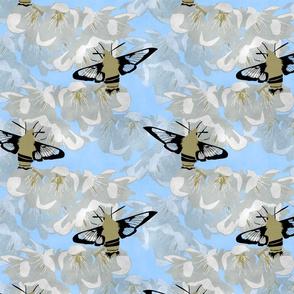 Hummingbird Hawk Moth and fruit blossoms - sky blue