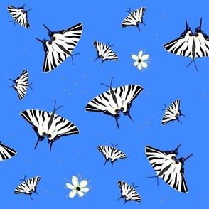 sail swallowtails