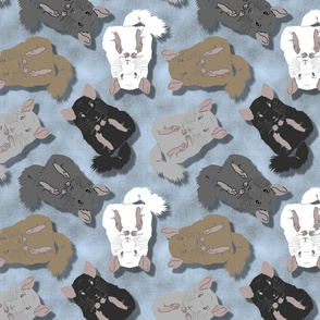 Medium Cuddly Chinchillas - blue slate