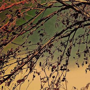 Trees _1
