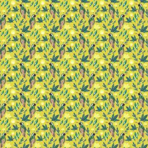 Xantus Hummingbird Mustard background