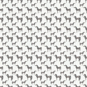 Arabian Horse Standing One-Way Repeat - Light Dapple Gray Horses with White Background