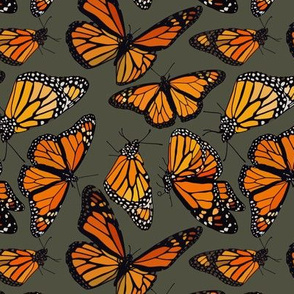 "Monarchs evergreen 6"""
