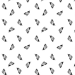 Small Black Swallowtail Butterflies