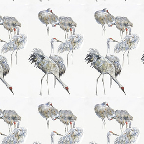 Sanhill Crane Grey