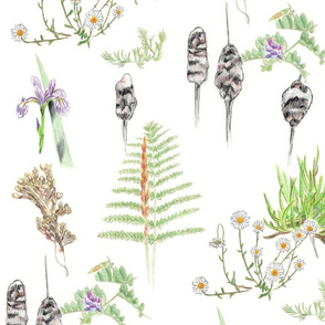 Great Island Plants