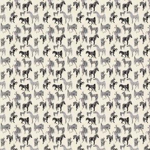 Arabian Horse Mixed - Gray Horses with Cream Background
