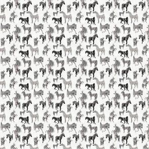 Arabian Horse Mixed - Gray Horses with White Background