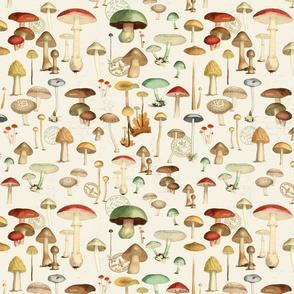 Hike More Mushrooms
