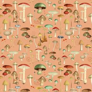 Hike More Mushrooms : Coral