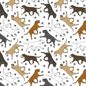 Trotting Staffordshire Bull Terriers and paw prints - white