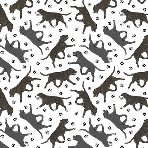 Trotting brindle and black Staffordshire Bull Terriers and paw prints - white