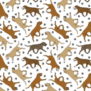 Trotting red Staffordshire Bull Terriers and paw prints - white