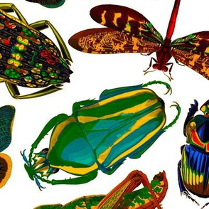 E.A. Séguy Insectes Assorted Large