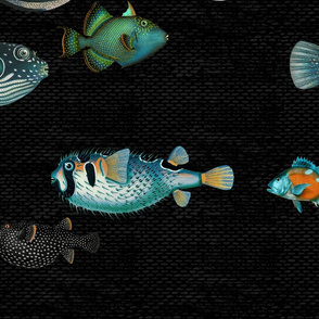 Acquario Fish black teal orange green