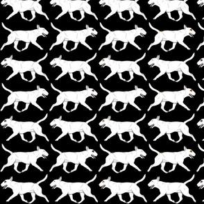 Trotting Miniature white Bull Terrier border - black