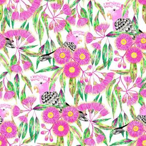 Gleeful Galahs Amongst  Gumnut Blossoms