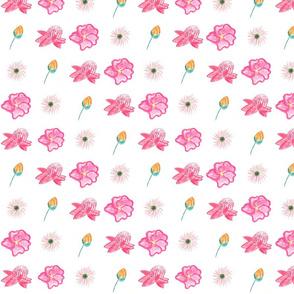 Austrailian Flowers 3000 x 3000-ed