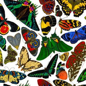 E.A. Séguy Papillons Assorted Large
