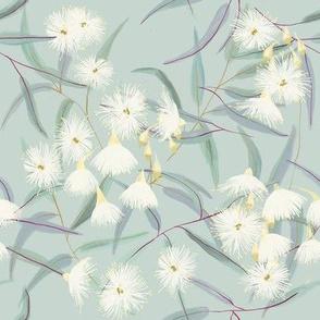 Flowering gum tree