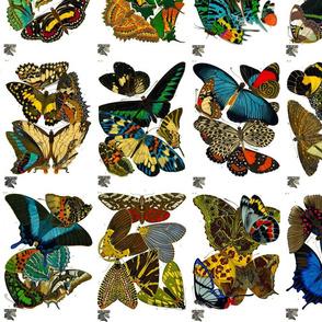 E.A. Séguy Papillons (small)