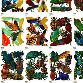 E.A. Séguy Insectes