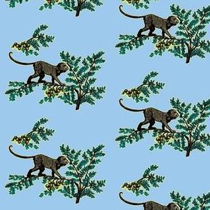 Blue monkey garden