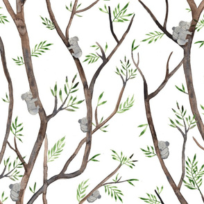 Eucalyptus trees and koala bears