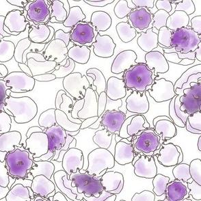 Violet Waxflower