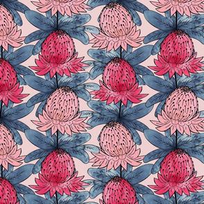 Australian Waratah Flowers