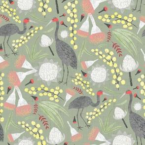 Brolgas and Blooms