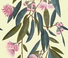 Australian Flora - Pink eucalyptus