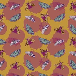 Butterflies & motts