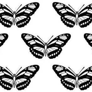 Butterfly // Black and White