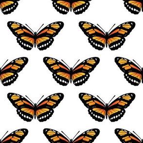 Butterfly // Monarch