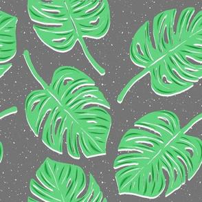 Green Monstera leaves on gray