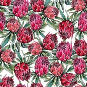 watercolor protea flower multi on white original