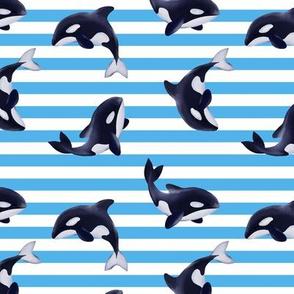 Orcas / blue stripes