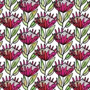 Protea Pink watercolor