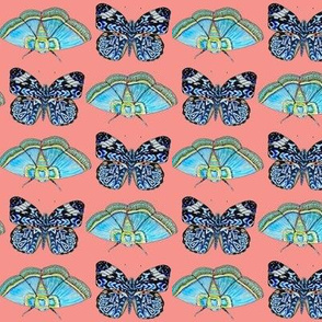 Blue butterflies on coral