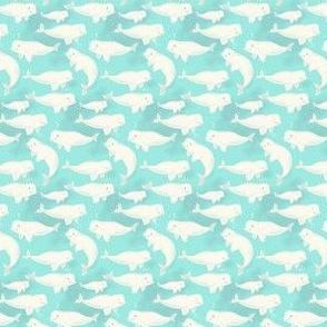 Belugas (small scale)