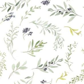 Italian Olives // White