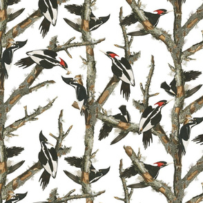 Audubon Ivory-billed Woodpecker