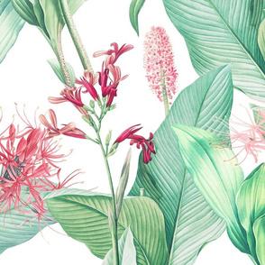 Botanist's Garden on White 150