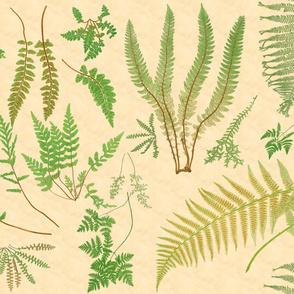 Fern Botanical ~ Parchment  ~ Jumbo